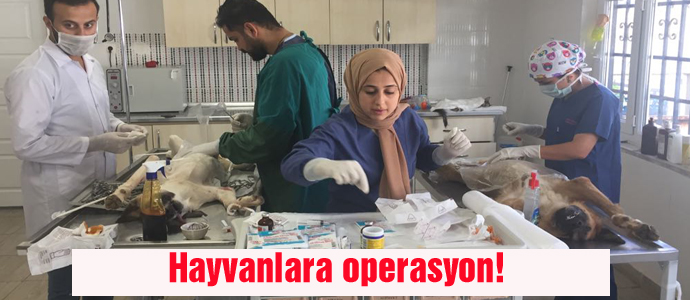 Hayvanlara operasyon!