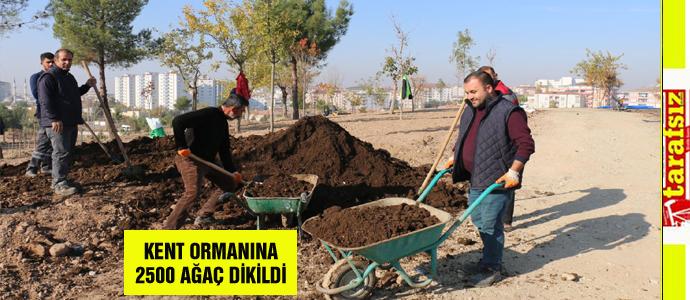 KENT ORMANINA 2500 AĞAÇ DİKİLDİ