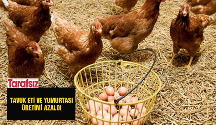 Tavuk eti ve yumurtası üretimi azaldı