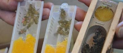360 adet ana arı dağıtıldı