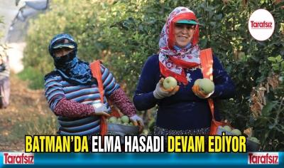 BATMAN'DA ELMA HASADI DEVAM EDİYOR