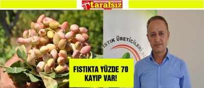 FISTIKTA YÜZDE 70 KAYIP VAR!