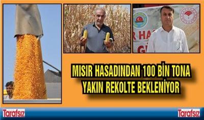 MISIR HASADINDAN 100 BİN TONA YAKIN REKOLTE BEKLENİYOR